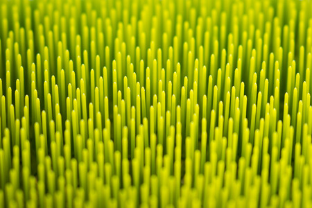 Macro abstract green background texture