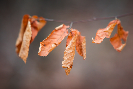 Fall autumn leaves on tree branch Stock Photo - 100221574