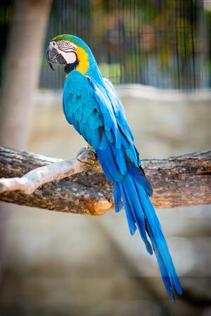 Beautiful blue macaw parrot bird Stock Photo