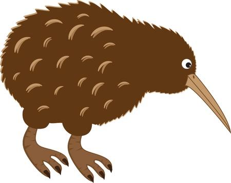 Kiwi Bird Vector