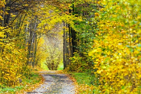 Beautiful Fall scene on forest road with colorful leaves on trees and in the road