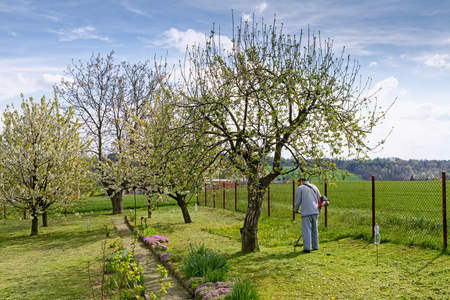 dibble: Gardener governs on the spring lawn in his garden