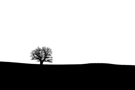 Silhouette of an old oak tree on the horizon - black and white