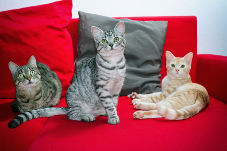 Three cats resting on a red couch