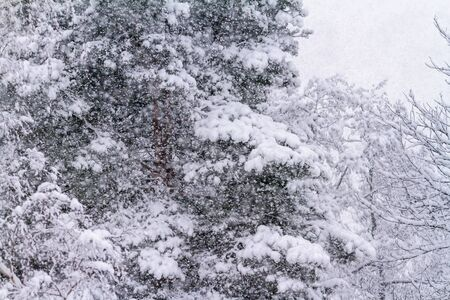 Heavy snowfall in the woods