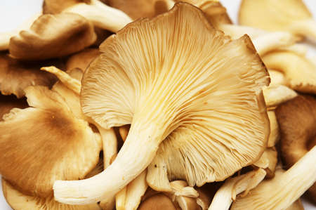 Group of raw delicious mushrooms isolated on white.