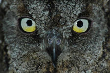 Owl symbol of wisdom. Close-up bright eyes on smart face.