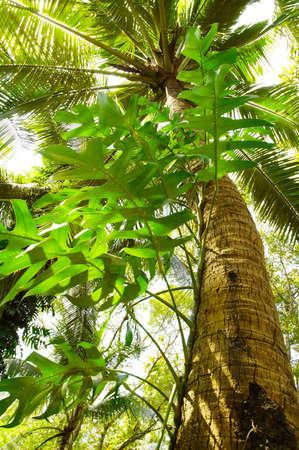 Giant Tree in the rain forest. Bright jungle landscape. Stock Photo - 6382718