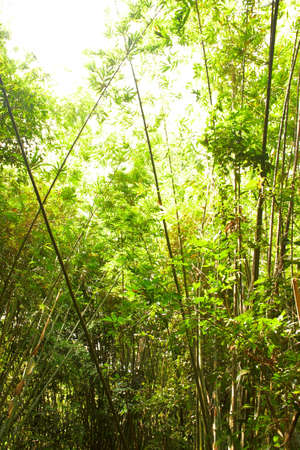 Bamboo in the rain forest. Bright jungle landscape. Stock Photo - 6382776