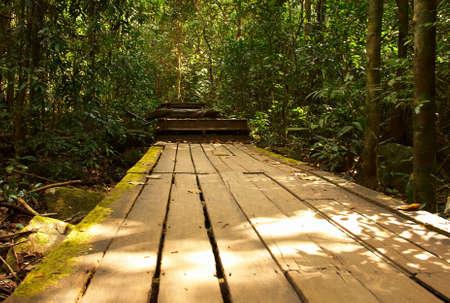 Wooden road in the rain forest. Bright jungle landscape. photo
