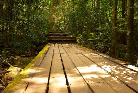 Wooden road in the rain forest. Bright jungle landscape. photo