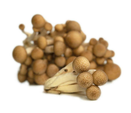 Heap of raw Buna Shimeji mushrooms isolated on white photo