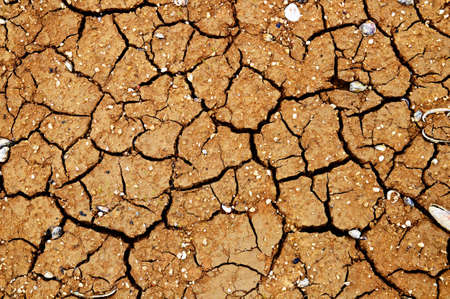 barren land: Abstract natural texture cracked earth. Good natural background