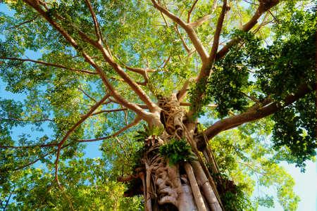 Giant Tree in the rain forest. Bright jungle landscape Stock Photo