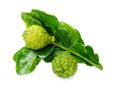 Fresh green lime. Kafir. Isolated over white