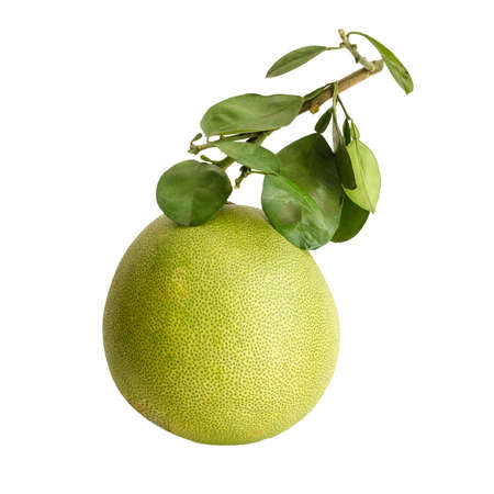Pomelo or Chinese grapefruit photo