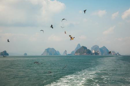 archipelago: Birds In Flight in Phang Nga archipelago near Phuket, Thailand