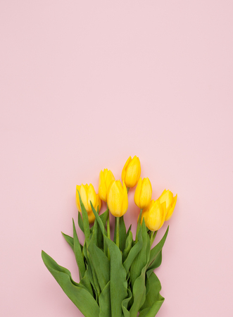 Yellow tulips on pink background Stock Photo