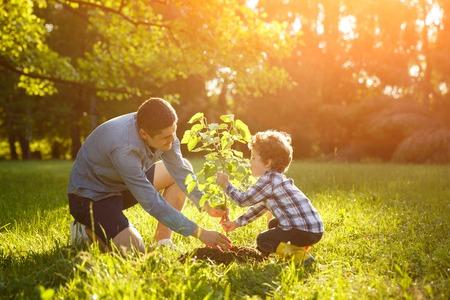 Father and son setting plant Foto de archivo