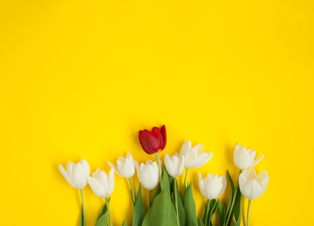 White tulips and one red flower Stock Photo