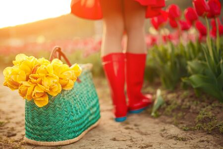 Wicker basket with yellow flowers placed on path near unrecognizable female on sunny summer day in tulip field 版權商用圖片