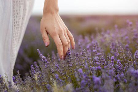 Mujer anónima caminando en la pradera y tocando lavandas en flor con tierna naturaleza