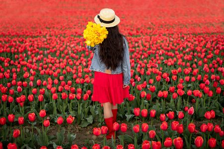 Unrecognizable blogger standing in blooming field during tulip season Reklamní fotografie