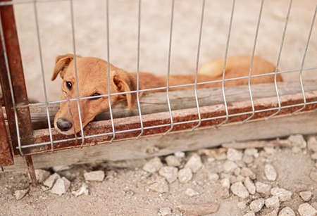 Sad dog lying in cage in shelter