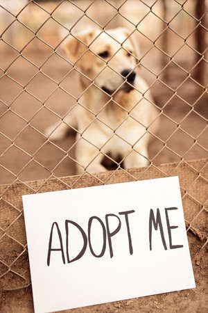 Adopt Me inscription on stray dog cage