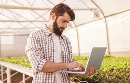Bearded gardener browsing laptop near hydroponic table