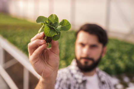 Blurred farmer examining lettuce seedling