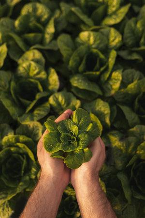 Crop gardener with fresh sprout Banco de Imagens