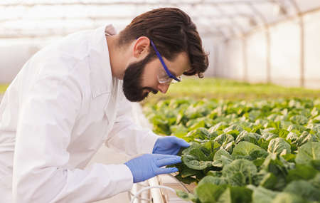 Bearded agronomist examining plants in greenhouse