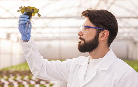 Bearded agronomist examining plant in hothouse