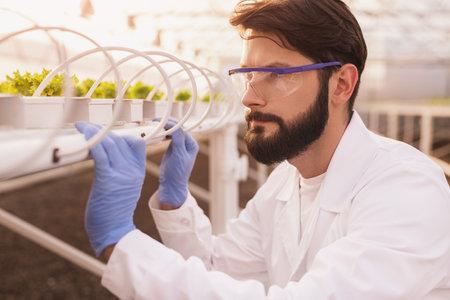 Bearded biologist examining plants on hydroponic table Banco de Imagens