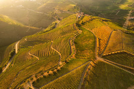 Rural landscape with agricultural plantations on hills
