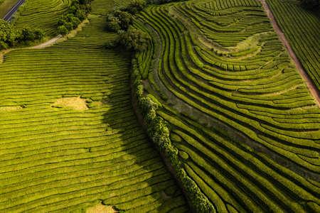 Green tea plantations aerial landscape
