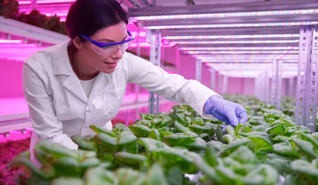 Researcher examining plants in laboratory