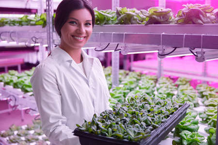 Smiling scientist with sprouter tray in modern greenhouse 免版税图像