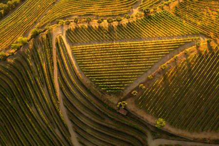 Green vineyard fields in countryside 免版税图像