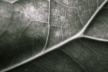 constituent: Components of the leaves Internal structure and composition Stock Photo