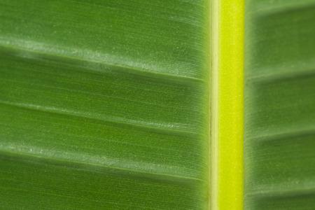 tabulate: Green leaf background