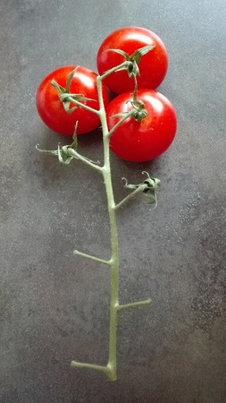Vine-ripened tomatoes - Three ripe vine tomatoes are resting at on inflorescence.