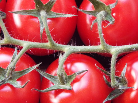 Vine-ripened tomatoes - vine-ripe tomatoes are resting at on inflorescence.
