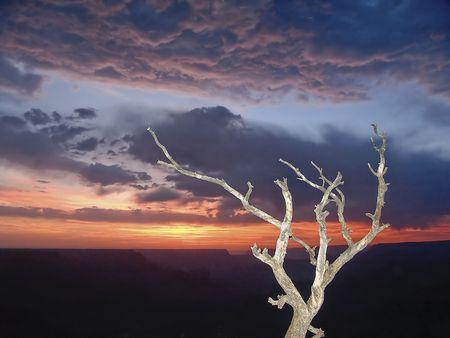 Grand Canyon Sunset Snag
