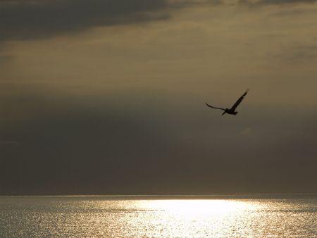 nags: Pelican solitario sobre la costa de NC