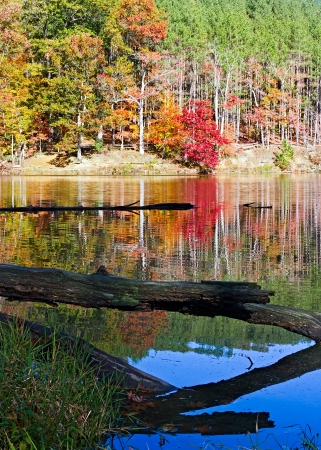 Fallen Log with Fall Trees and Lake