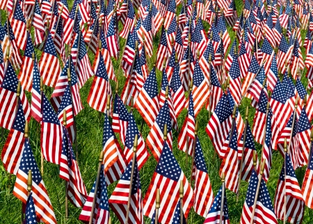 Field of US Flags photo