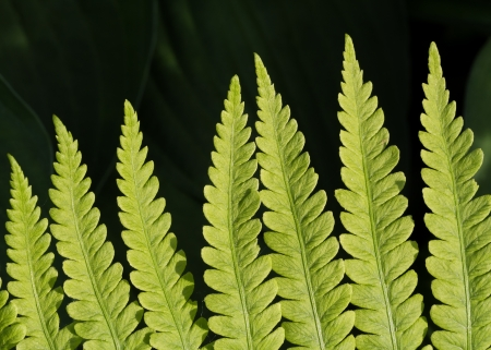 Lady fern frond photographed close photo