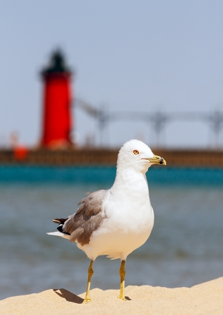 A seagull stands on beach sand with the South Haven Lighthouse and Lake Michigan behind